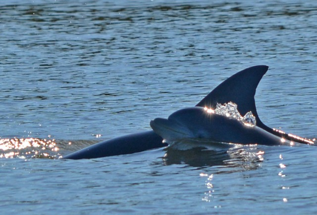 mother and dolphin child