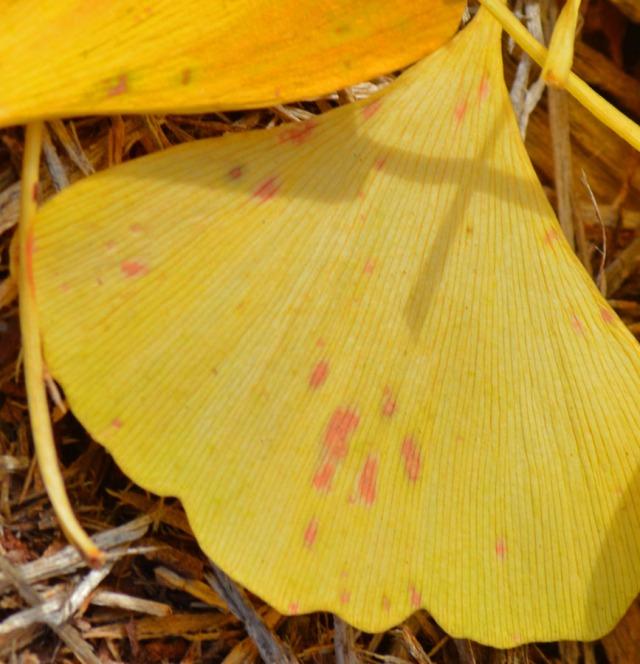 red speckled leaf