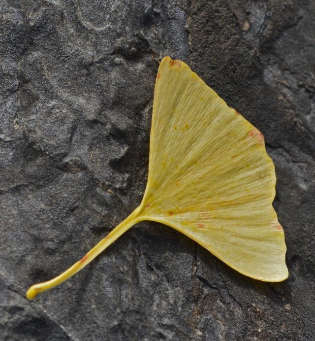 single leaf on rock