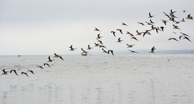 birds over the water