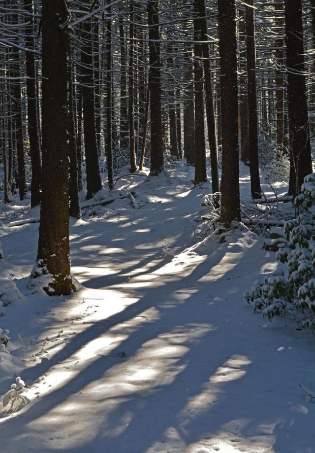 long tree shadows