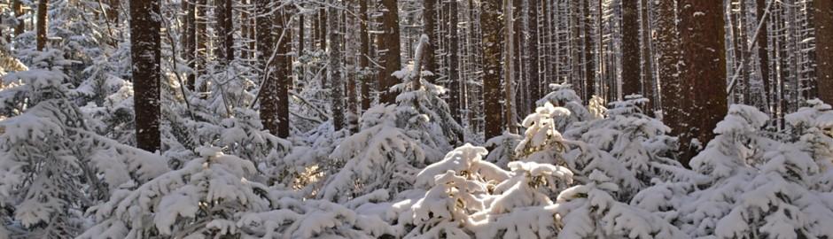 winterland header