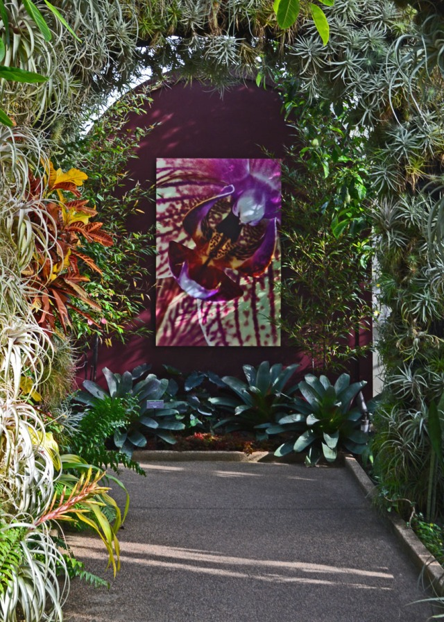 arbor and orchid pic