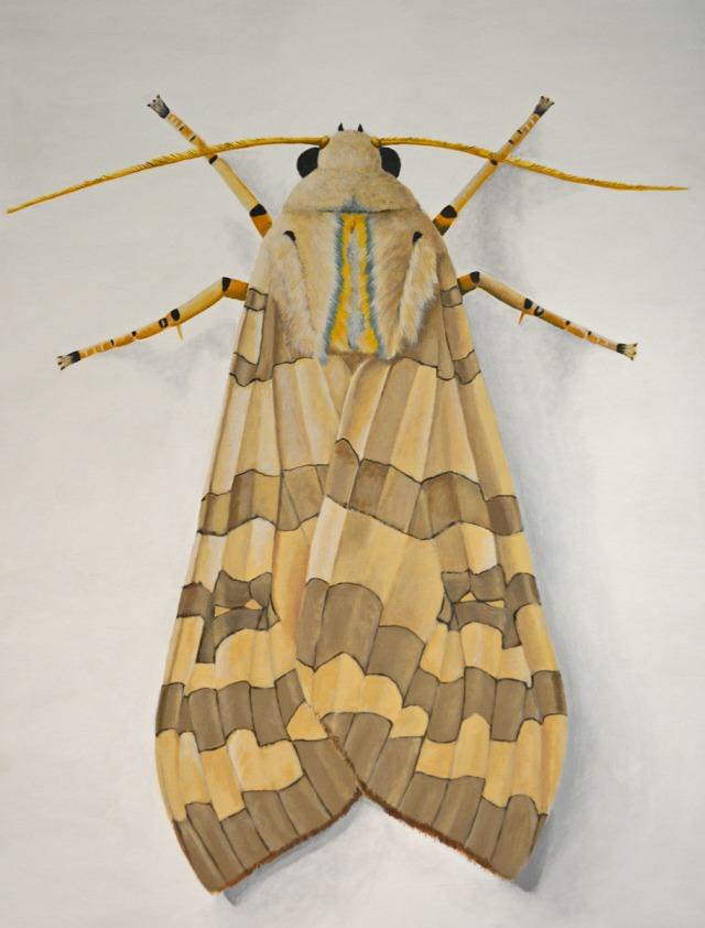Banded Tussock Moth by Deborah Davis