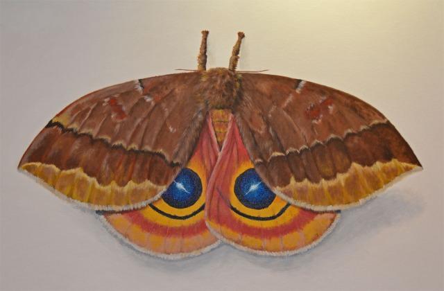 Io Moth by Deborah Davis