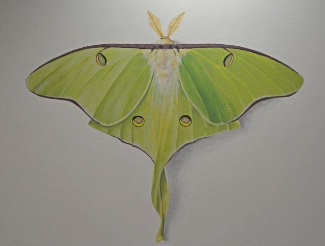 luna moth by Deborah Davis