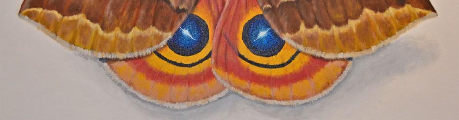 moth header