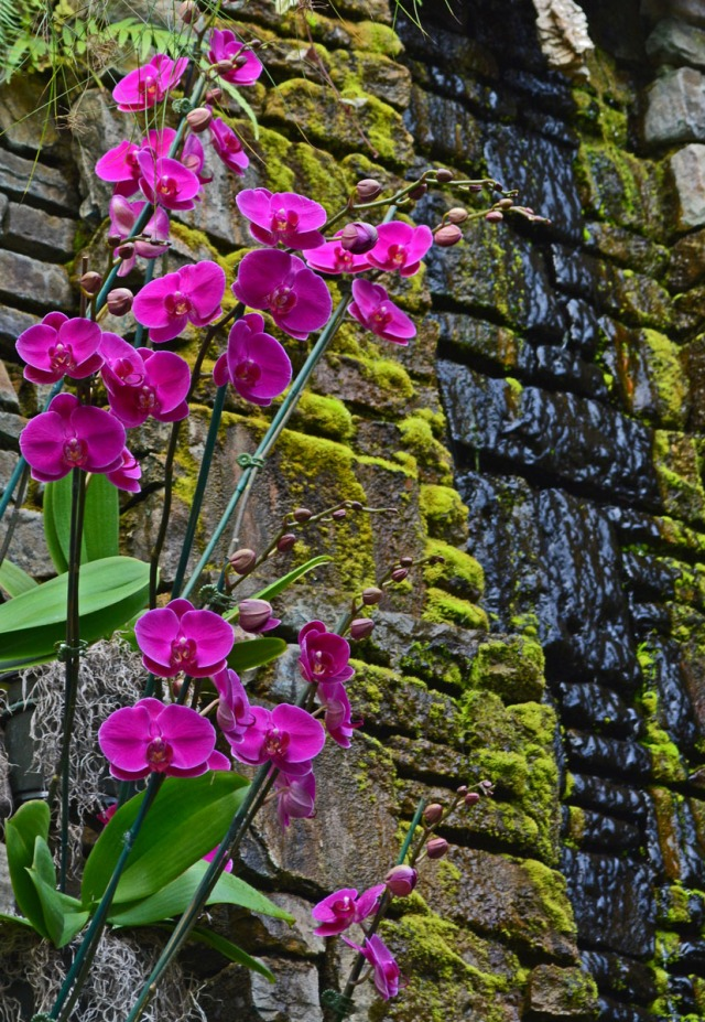 purple orchids and waterfall