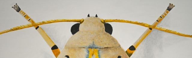Banded Tussock Moth antennae