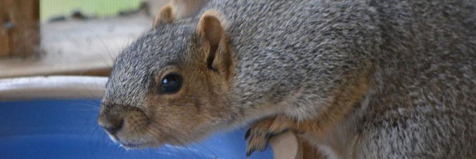 squirrel header