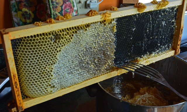 scraping off honey and honeycomb