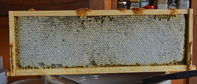 frame filled with capped honeycomb