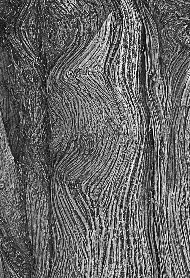 tree trunk 150