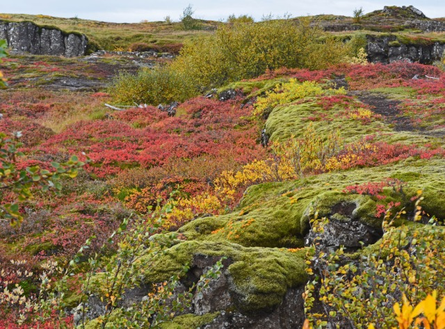 autumn-colors-at-thingvellir