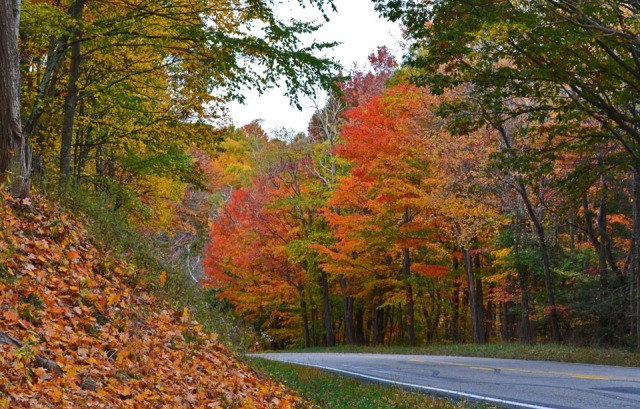 fall-color-along-the-road
