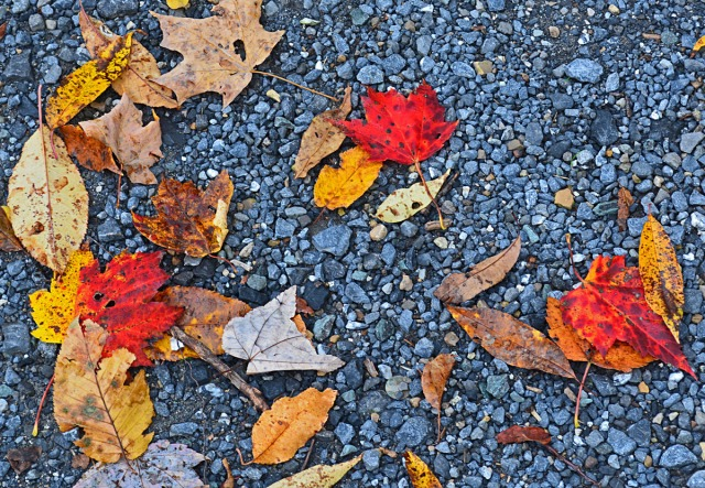 red-and-yellow-leaves-on-gravel
