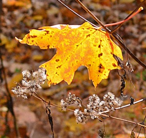 yellow-leaf-suspended