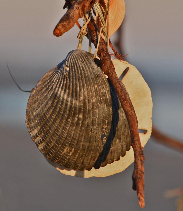 black-shell