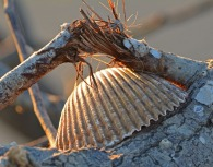 brown-shell-on-branch-150