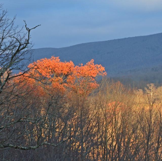 flaming-orange