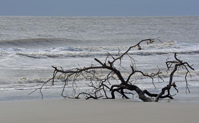 tree-on-grey-morning
