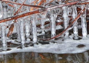 icicles hanging from branch