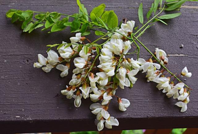 Locust blossoms