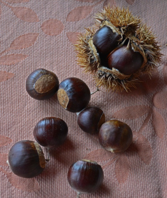 "chestnut ""chocolates"""
