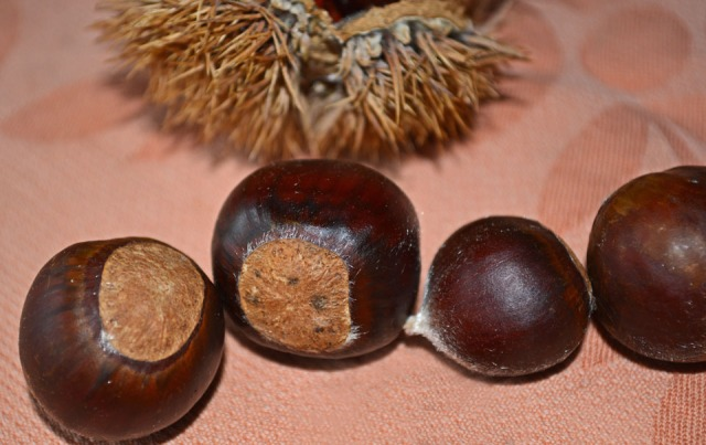 line of chestnuts