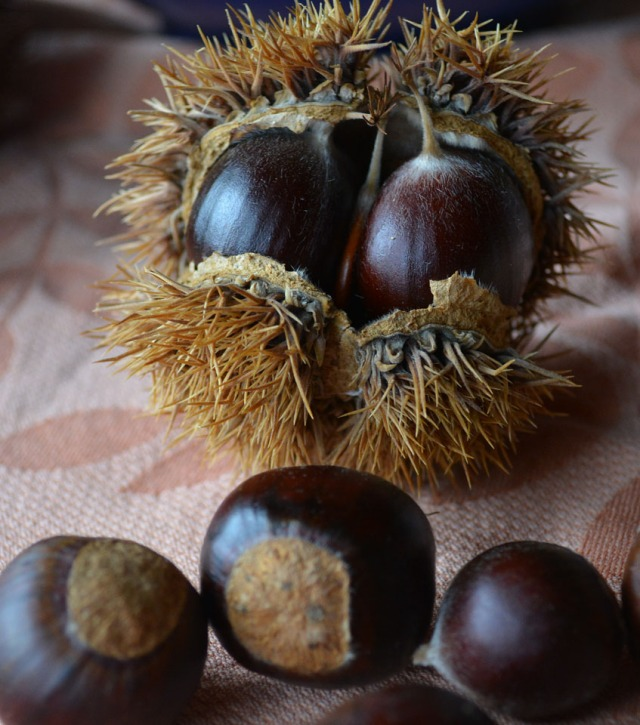 twin chestnuts