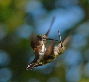 Two females belly-bumping