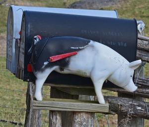 piggy mailbox